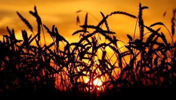 Сельское хозяйство и АПК